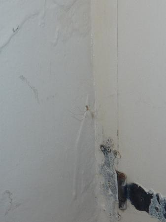 Barnabrow Country House: Spider. The black thing is the hinge of the closet door.