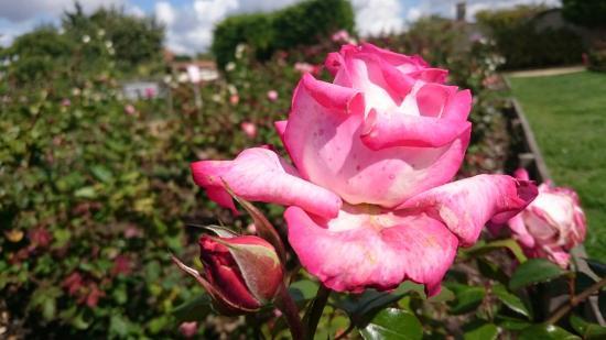 Terre de Rose Distillerie