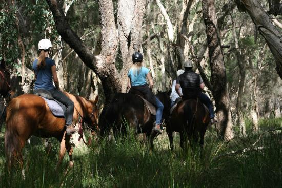 1800 Trail Rides