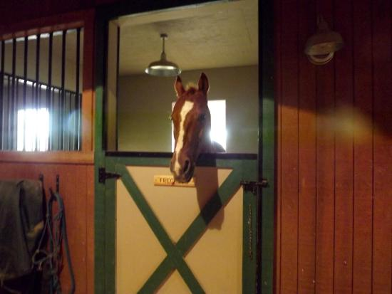Catheys Valley, CA: Another horse in his stall.
