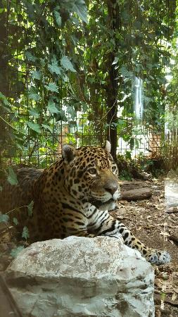 Felini Picture Of Giardino Zoologico Di Pistoia Pistoia