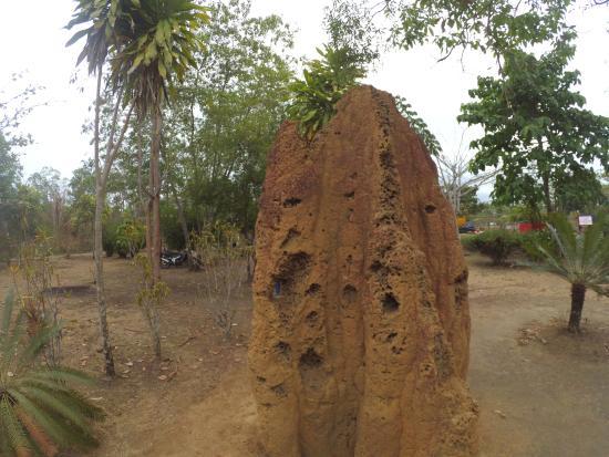 Merauke, Indonesia: Rumah Semut