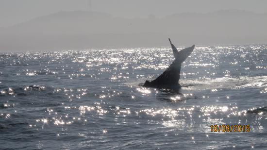 location photo direct link whale watching francisco california