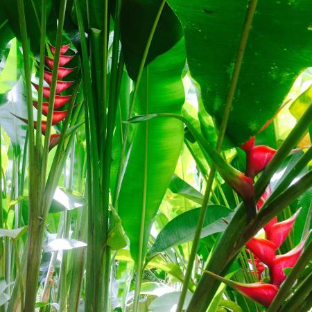 Hacienda Combia: photo2.jpg