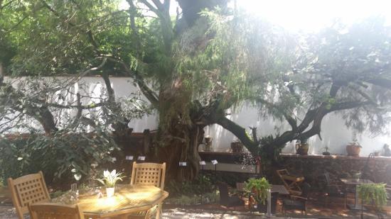 Colibri Hotel B&B: Un patio hermoso para desayunar