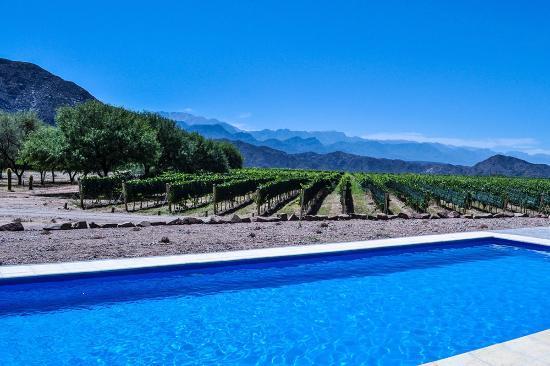 Hotel de Vino: La piscina y la viña