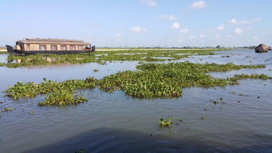 Cosy Regency: Vembanadu lake