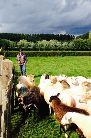 Schijndel Sheep Pens