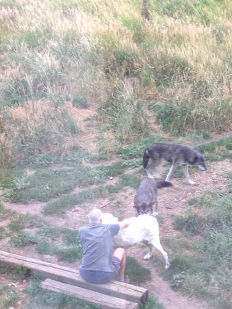 Howlers Inn Bed & Breakfast and Wolf Sanctuary: What devotion the innkeepers have for the wolves!