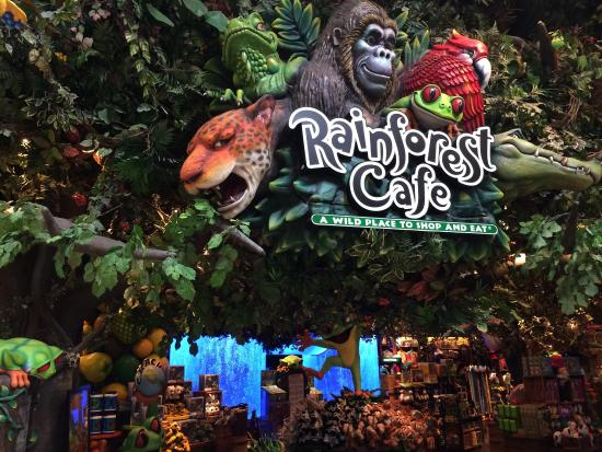 Rainforest Cafe Chicago Locations
