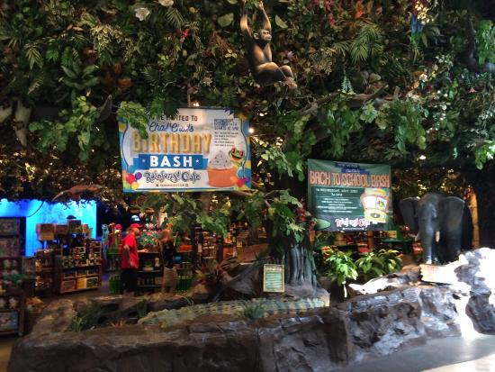 Entrance To The Cafe Picture Of Rainforest Cafe Ontario Tripadvisor