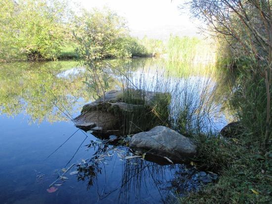Apple Orchard Inn : peaceful pond nearby