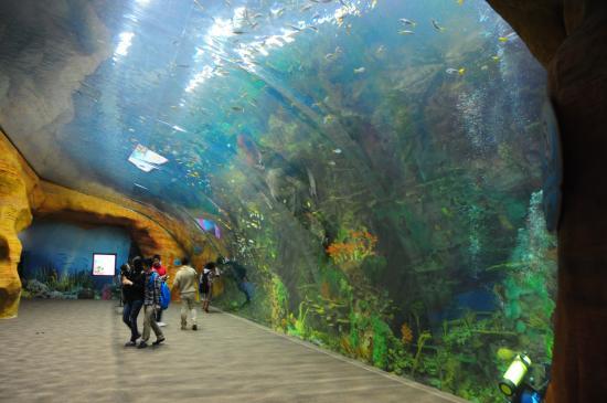 Chimelong Ocean Kingdom Aquarium