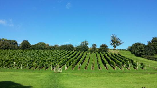 Budleigh Salterton, UK: Vineyard