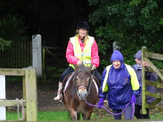 Exmoor Pony Centre: that was amazing!