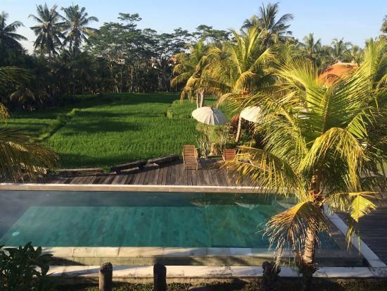 Ubud Sari Health Resort: photo8.jpg