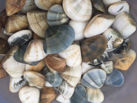 Sandhills Beach Resort & Spa: Дары моря