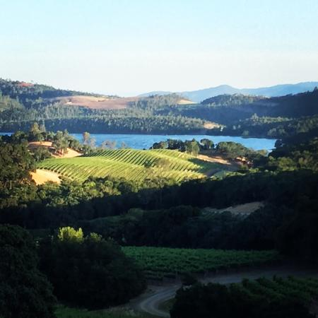 Buehler Vineyards