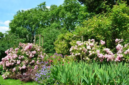 londres chelsea physic garden: