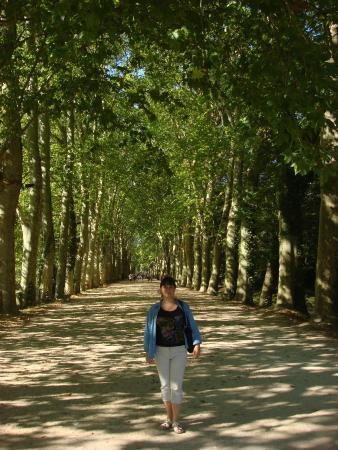 Chateau de Chenonceau: Алле, ведущая к замку.