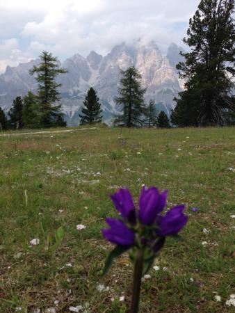 Monte Averau: お花