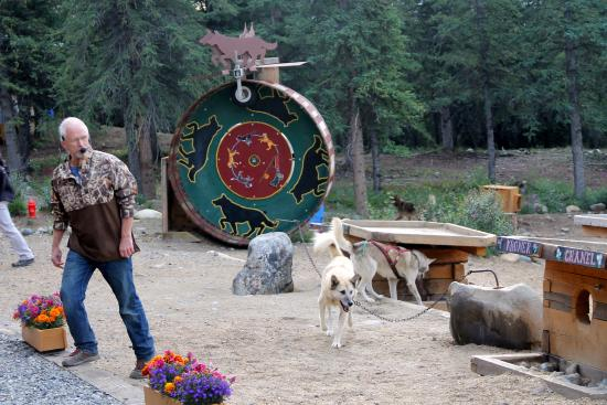 Jeff King Talks About His Dogs Picture Of Husky Homestead - Husky homestead