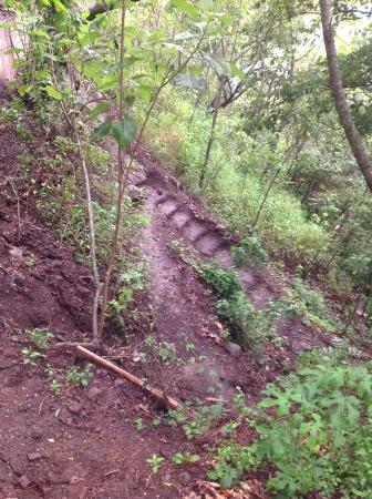 Laguna Lodge Eco-Resort & Nature Reserve: Hiking Trail at Laguna