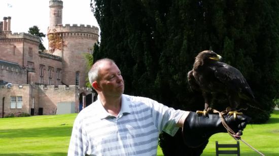 Dalhousie Castle Falconry Eagle