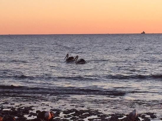 Onslow Sun Chalets: Pelicans at sunset