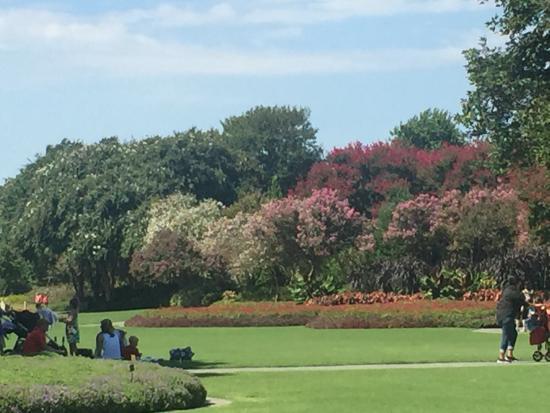 Giardino Picture Of Dallas Arboretum Botanical Gardens Dallas Tripadvisor