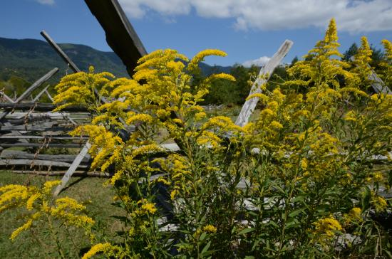 Ewing, Wirginia: more Wildflowers