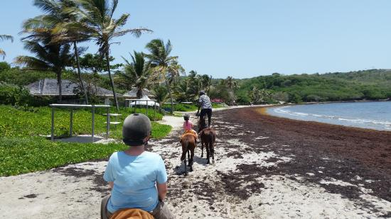 Gros Islet Quarter, Santa Lucía: Levy standing well riding his horse..kids loved that!