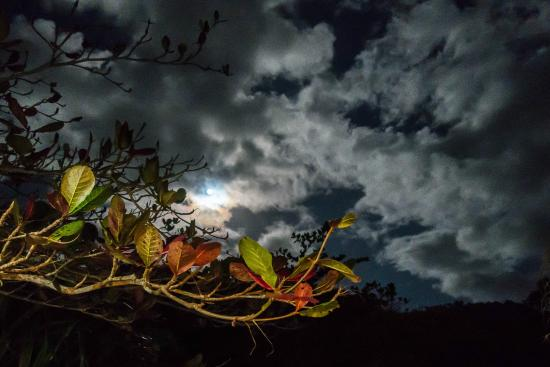 Marigot, Dominica: Full moon from the restaurant