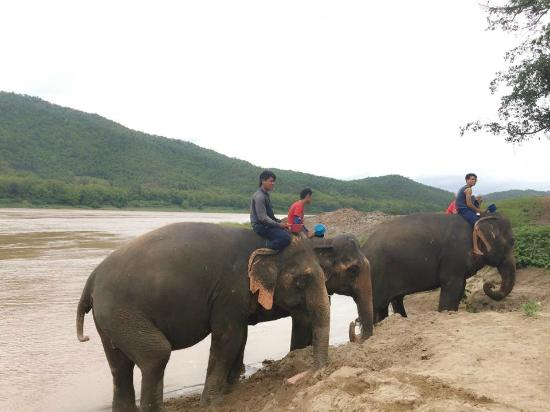 Nam Ou Riverside Hotel & Resort : Our Elephant Camp On The Way To Kuangsi Waterfall