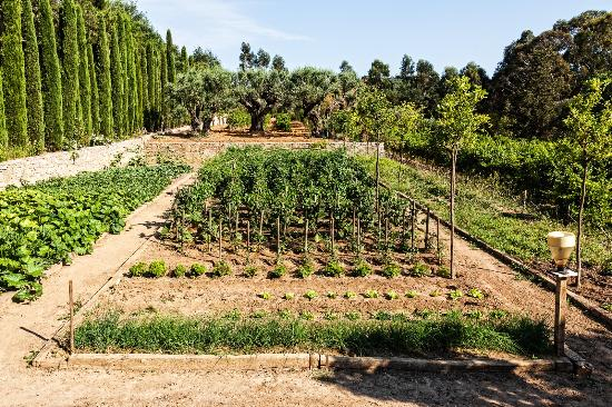 le potager picture of domaine les mesanges gassin tripadvisor. Black Bedroom Furniture Sets. Home Design Ideas