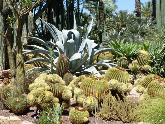 jardin - Bild von Huerto Del Cura Jardin Artistico Nacional, Elche - TripAdvisor