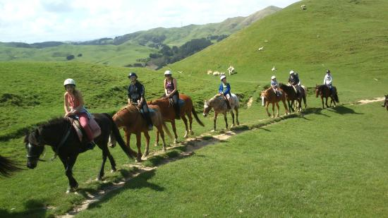 Ohariu Valley Equestrian Centre