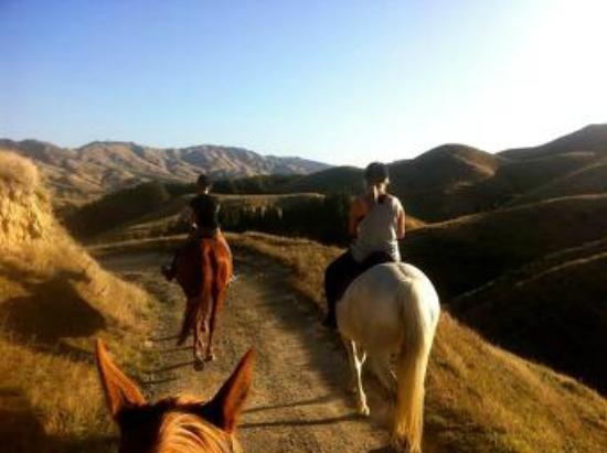 Ohariu Valley Equestrian Centre : Enjoy the view!