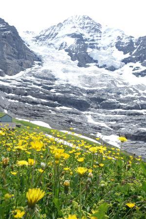 Grindelwald, Schweiz: アイガーグレッチャーの駅から少し下ったところは氷河の迫力を感じられます