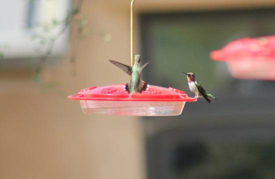Ash Canyon Bed & Breakfast: Busy feeders