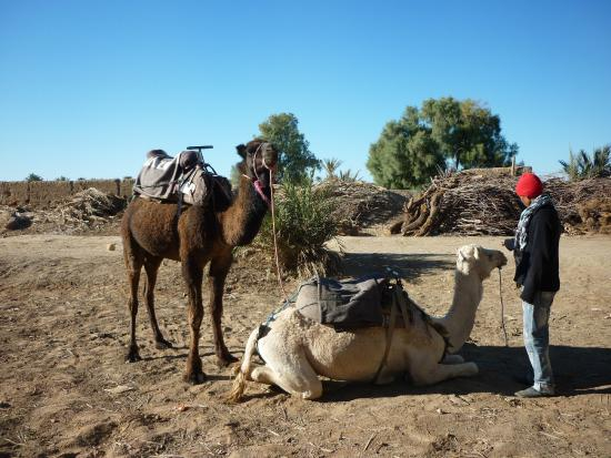 Chez Youssef: our camels for the desert trip