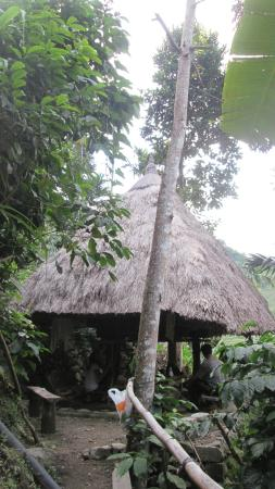 Batad, Philippines: Another native hut at the lower portion of the terraces where Ramon's Homestay is located.