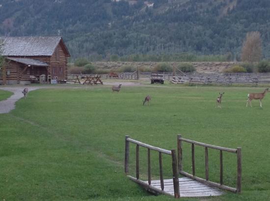 R Lazy S Ranch: Ranch