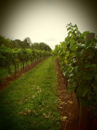 Jost Vineyards: A wonderful stop on our tour..