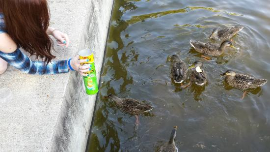 Point Randall Resort: Feeding the ducks.