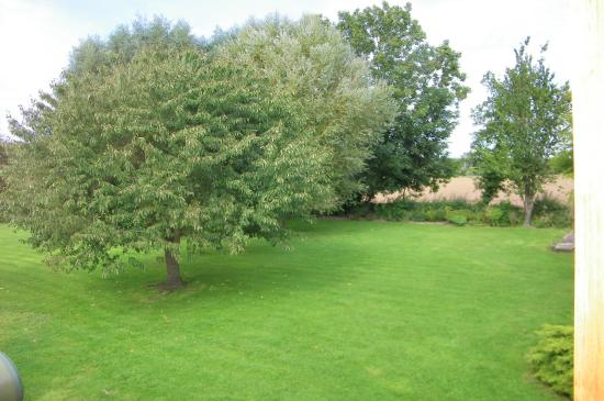 Staunton on Wye, UK: The garden view from our bedroom