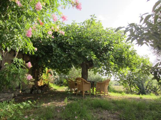 Agroturismo Sa Casa Rotja : salon extérieur autre appart