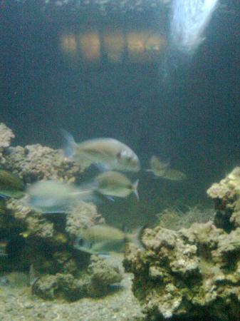 Poisson picture of aquarium laboratoire arago banyuls - Poisson shark aquarium ...