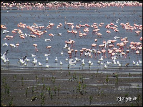 Sewri Jetty: Flamingos and other birds