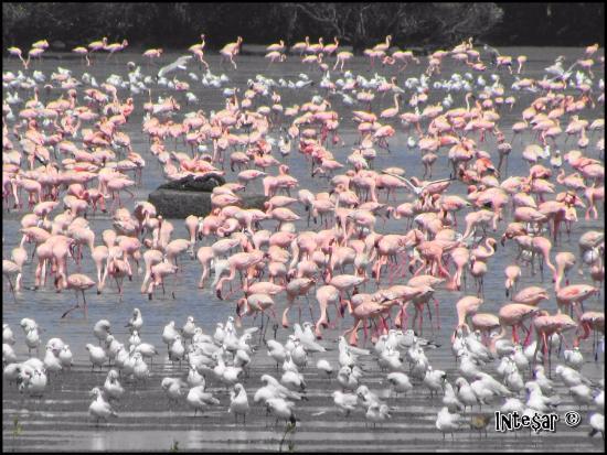 Sewri Jetty: Pink & white brigades